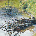 Branches By A River Bank by Nick Payne