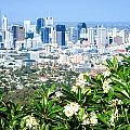 Brisbane Cbd by Peta Thames