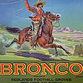 Bronco Oranges by American School