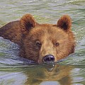 Brown Bear Painting by David Stribbling