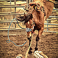 Bucking by Caitlyn  Grasso