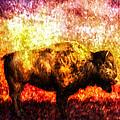Buffalo by Bob Orsillo