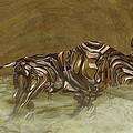 Bull by Jack Zulli