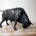Bull by Nikola Litchkov