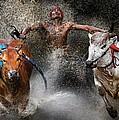 Bull Race by Wei Seng Chen