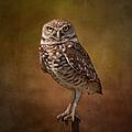 Burrowing Owl Portrait by Kim Hojnacki