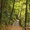 Bush Pathway Waikato New Zealand by Colin and Linda McKie