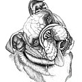 Buster by Catherine Garneau