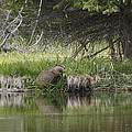 Busy Beaver by Charles Warren