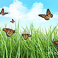 Butterflies In Tall Wet Grass  by Sandra Cunningham
