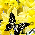 Butterfly Among The Daffodils by Edward Fielding