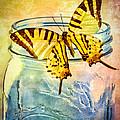 Butterfly Blue Glass Jar Print by Bob Orsillo