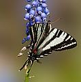 Butterfly Delight by Lara Ellis