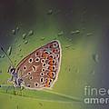 Butterfly by Diana Kraleva