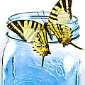 Butterfly On A Blue Jar Poster by Bob Orsillo