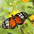 Butterfly Wings by Anne Gilbert