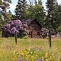 Cabin And Wildflowers by Athena Mckinzie