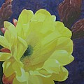 Cactus Morning by Janis Mock-Jones