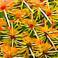 Cactus Pattern 2 Yellow by Amy Vangsgard