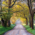 Cades Cove Great Smoky Mountains National Park - Sparks Lane Print by Dave Allen