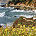 California Coast Overlook by Carol Groenen