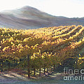 California Vineyard Series Vineyard In The Mist by Artist and Photographer Laura Wrede