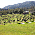 California Vineyards In Late Winter Just Before The Bloom 5d22073 by Wingsdomain Art and Photography