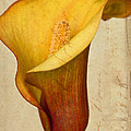 Calla Lily Vintage  by Heidi Smith