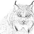 Canadian Lynx a.k.a. Samurai Cat