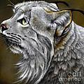 Canadian Lynx by Jurek Zamoyski