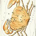 Cancer Constellation - 1825 by Daniel Hagerman