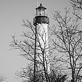Cape May Light B/w by Jennifer Lyon
