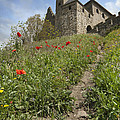Carcassonne Poppies by Robert Lacy