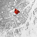 Cardinal In Winter Print by Ellen Henneke