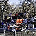 Carriage Driver - Central Park - Nyc by Madeline Ellis