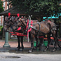 Carriage Horses At City Market by Linda Ryan