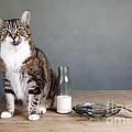 Cat And Herring by Nailia Schwarz