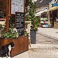 Cat And Restaurant Concarneau Brittany France by Colin and Linda McKie