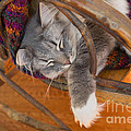 Cat Asleep In A Wooden Rocking Chair by Louise Heusinkveld