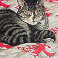 Cat On Quilt  by Anne Robinson