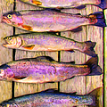 Catch Of The Day - Painterly - V1 by Wingsdomain Art and Photography