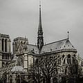 Cathedral Of Notre Dame De Paris by Marco Oliveira