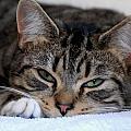 Cats 61 by Joyce StJames
