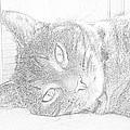 Cat's Eye by J D Owen