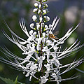 Cat's Whiskers by Cheri Randolph