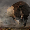 Charging Bison by Daniel Eskridge