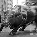 Charging Bull 1 Print by Tony Cordoza