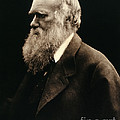Charles Darwin By Julia Margaret by Wellcome Images