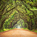 Charleston Sc Edisto Island - Botany Bay Road by Dave Allen