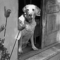 Charleston Shop Dog In Black And White by Suzanne Gaff